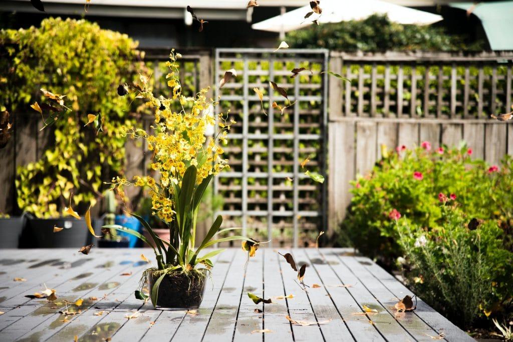 clôture végétalisée